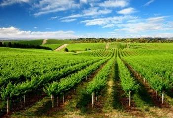 Reinventing Irrigation